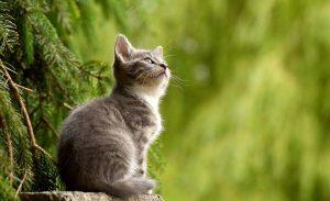 feline-diabetes-symptoms