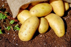 how-many-potatoes-in-a-pound