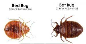 bat-bugs