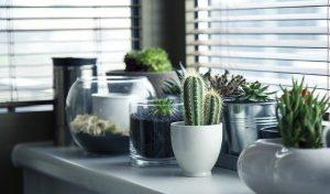 Cactus-spiny-plant